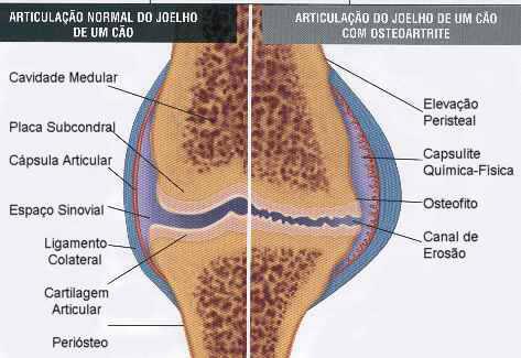 medicamento cartilagem joelho