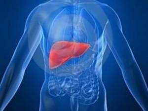 fígado