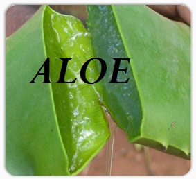 aloe-vera-for-cancer