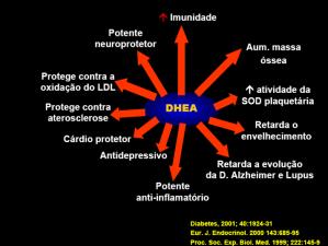 DHEA 2