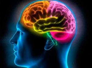 cerebro190513