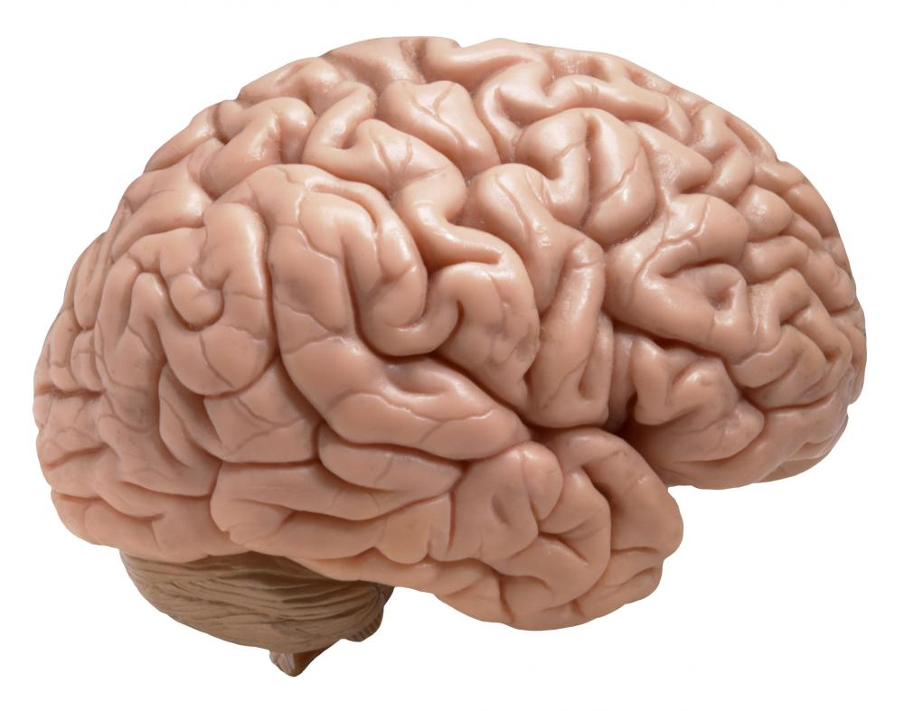 esclerose-lateral-amiotrofica-ela